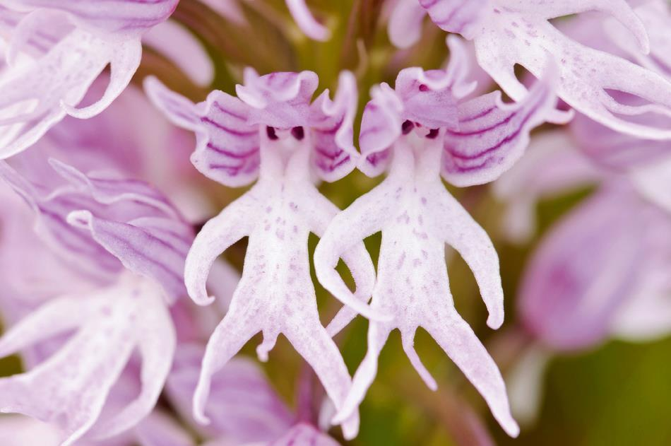 Прикольные фото цветы 2
